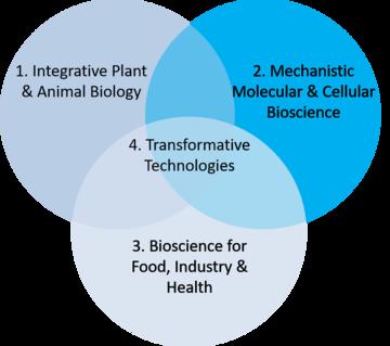 Venn diagram of the four DTP themes